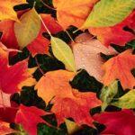 Eltern-Infobrief zum Schulbetrieb im Herbst